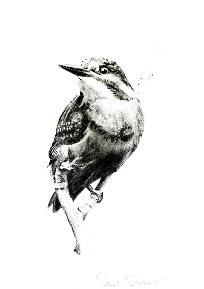 Kingfisher Study V