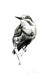 Kingfisher Study V by Sarah Stokes -  sized 9x12 inches. Available from Whitewall Galleries